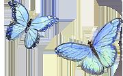 Casart butterflies